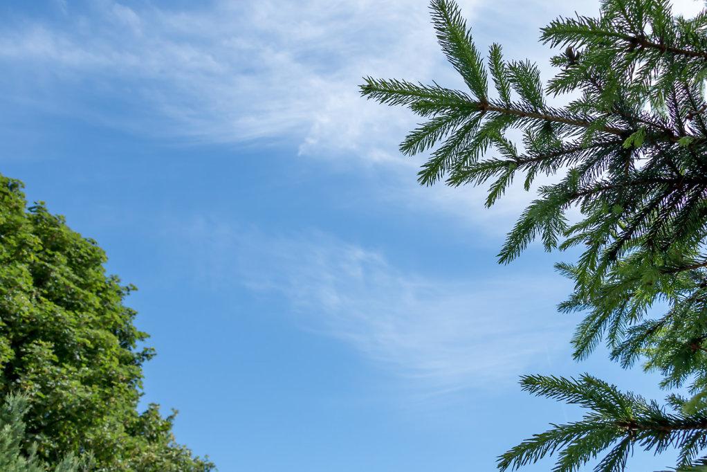 Prickly Sky