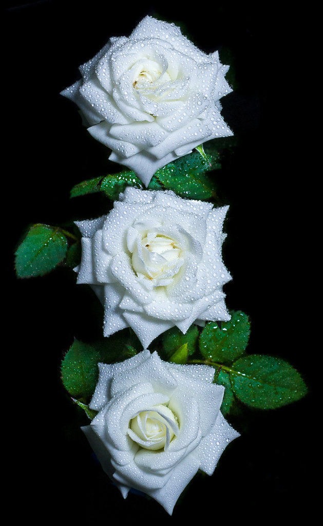 White Trioses