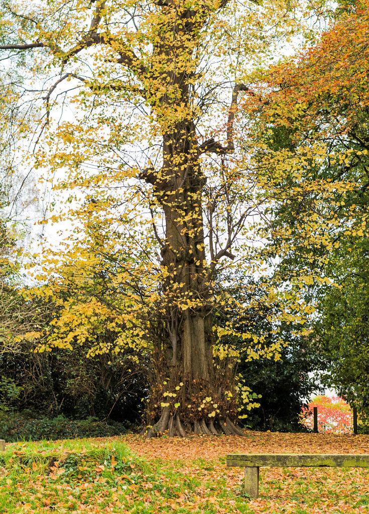 Haughton Hall Tree